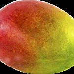 mango dangers