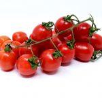 tomato dangers